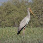 birdwatching-2